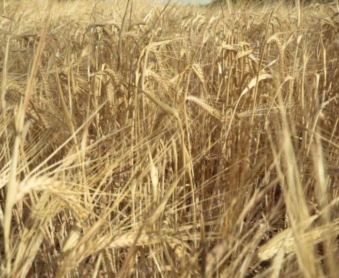 Innovazione-digitale-che- accelera- transizione -ecologica-della -filiera -agroalimentare